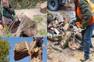 Лечение, опиловка, спил выкорчевывание деревьев